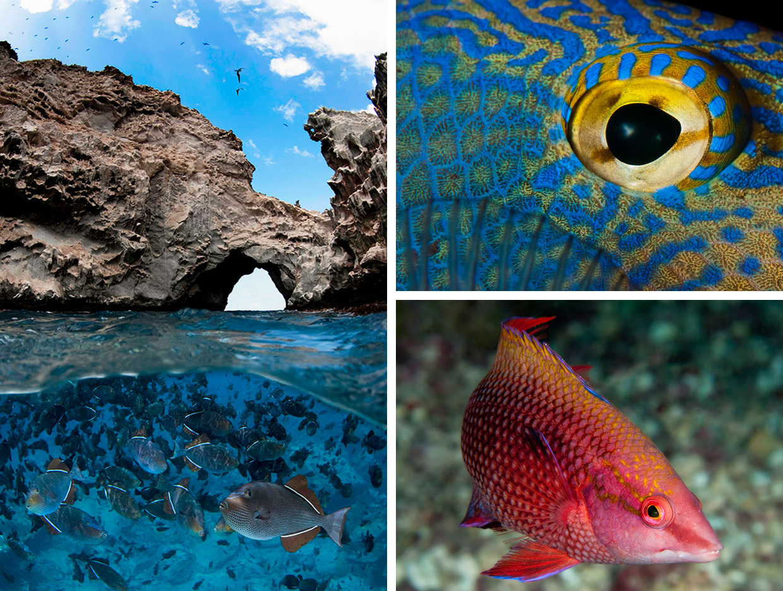 Diving Ascension Island