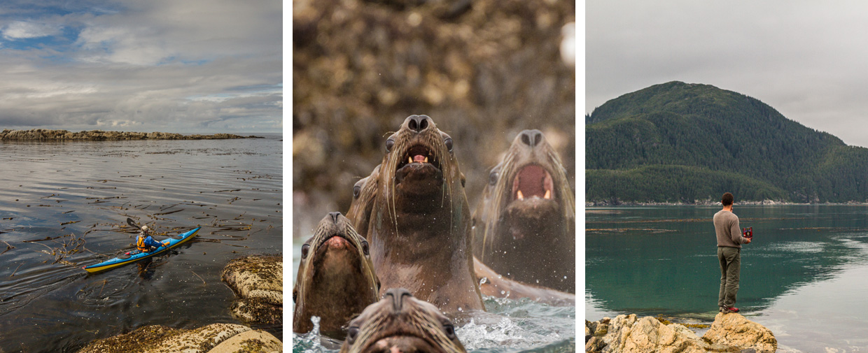 blow holes and sea lions on the coast of Alaska
