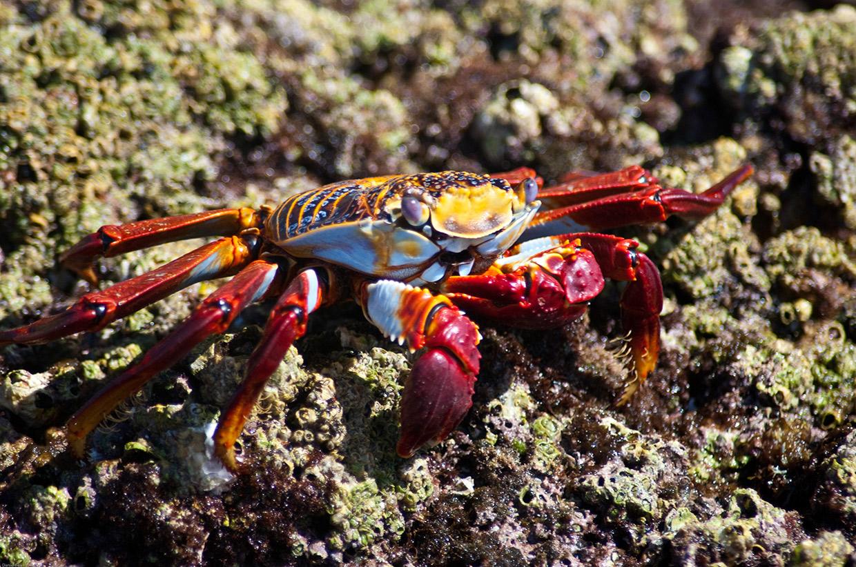 crab on Isla Espiritu Santo
