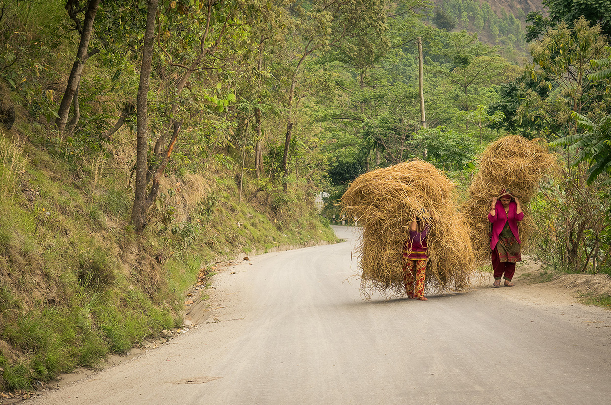 Carrying crops alongside the road to Pokhara