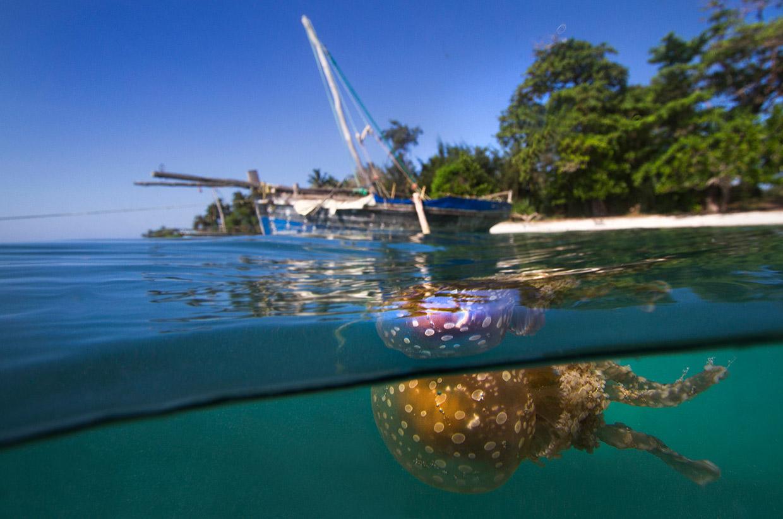 Jellyfish with boat - Aaron Gekoski