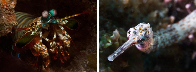 Exploring our oceans - Aaron Gekoski