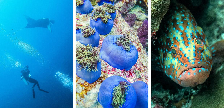 diving-in-mayanmar-03