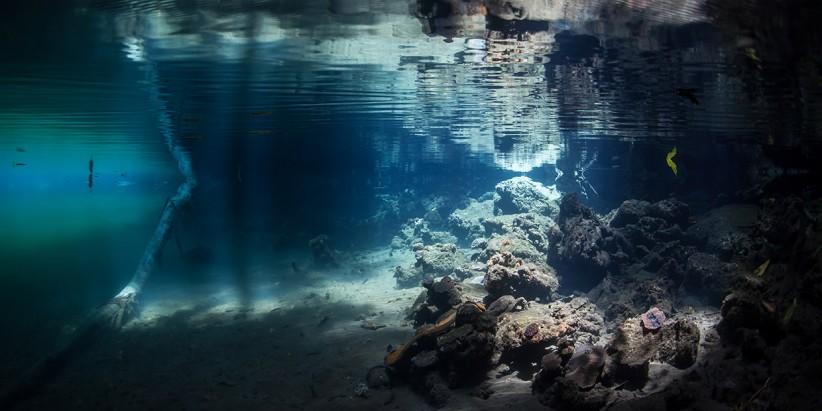 Petri Dish Diving