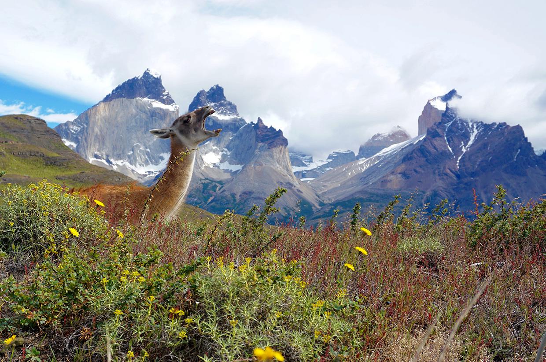 matt-maynard-patagonia-01