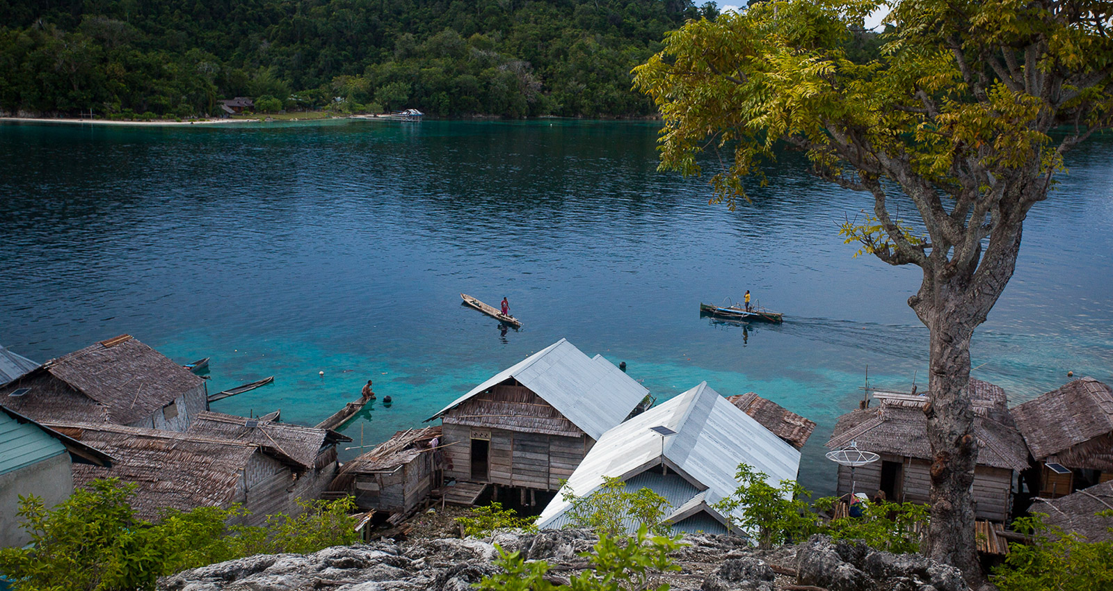 Between the Bajau and Blood Tests