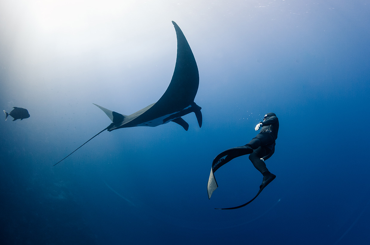 More Than Just Jaws – Diving with Lukas Müller