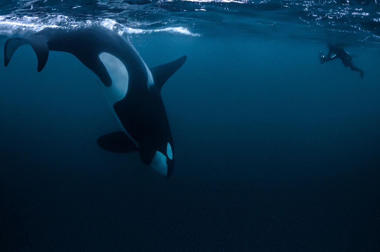 The Silent World: The Arctic Whale project